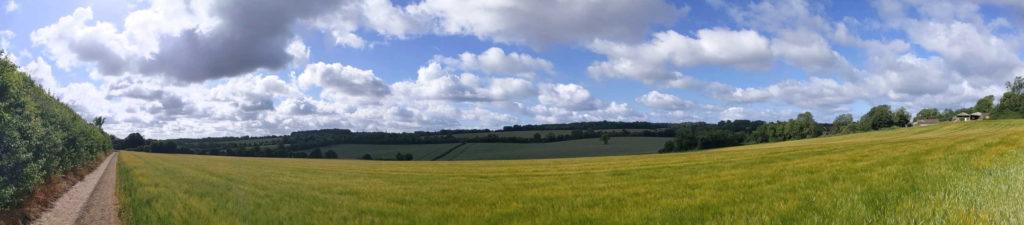Sparsholt field